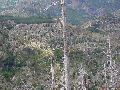 Scenery-Landschaft-dead-trees-Mt-Mount-St-Helens-Washington-USA-DSCN3725.jpg