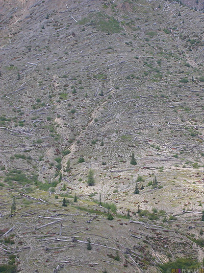 Scenery-Landschaft-dead-trees-Mt-Mount-St-Helens-Washington-USA-DSCN3742.jpg