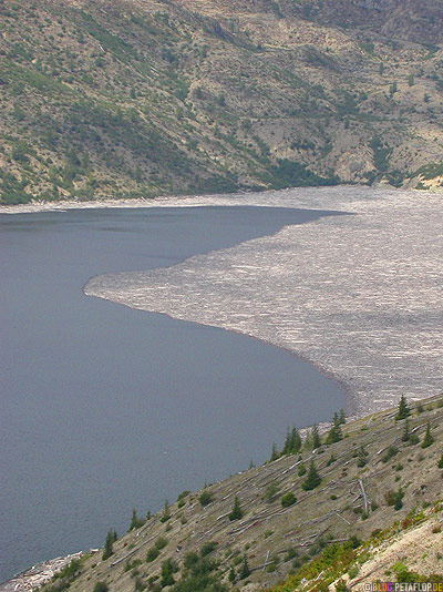 Scenery-Landschaft-Spirit-Lake-Logs-Lumber-Baumstaemme-See-Mt-Mount-St-Helens-Washington-USA-DSCN3752.jpg
