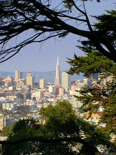Transamerica-Pyramid-Skyscraper-View-from-Buena-Vista-Park-Hill-SF-Skyline-San-Francisco-California-Kalifornien-USA-DSCN5130.jpg