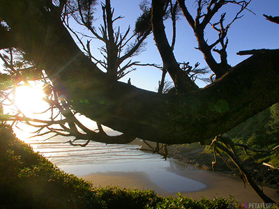 Tree-Baum-Strand-Beach-near-devils-churn-Oregon-Coast-Oregon-USA-DSCN3927.jpg