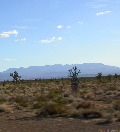Joshua-Tree-Trees-California-Kalifornien-USA-DSCN5860.jpg