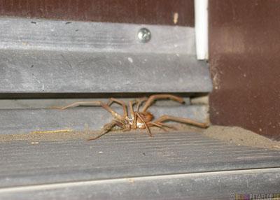 spider-Spinne-Furnace-Creek-Ranch-Hotel-Motel-at-105-degrees-fahrenheit-Death-Valley-Deathvalley-Desert-California-Kalifornia-USA-DSCN5686.jpg