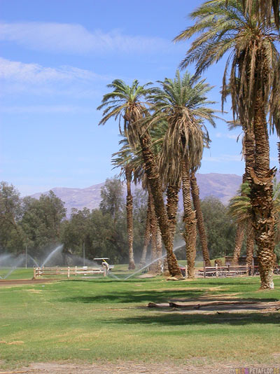 worlds-lowest-golf-course-tiefster-Golfplatz-der-Welt-Palms-Palmen-Furnace-Creek-Ranch-Death-Valley-California-Kalifornien-USA-DSCN5691.jpg