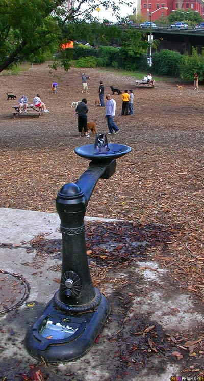 Water-fountain-for-dog-and-human-dog-run-Brooklyn-New-York-NY-USA-DSCN8763.jpg