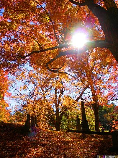 bunter-Herbstwald-Gravestones-Indian-Summer-Trees-Canton-Cemetary-Canton-MA-Massachusetts-DSCN8847.jpg
