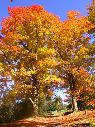 colourful-fall-Indian-Summer-Trees-Canton-Cemetary-Canton-MA-Massachusetts-USA-DSCN8832.jpg