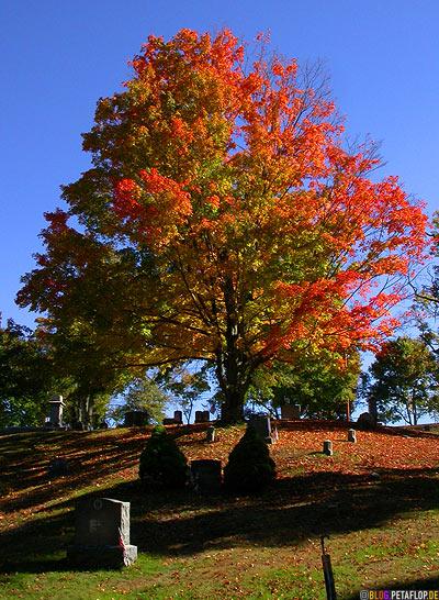 Gravestones-Indian-Summer-Tree-Canton-Cemetary-Canton-MA-Massachusetts-DSCN8817.jpg