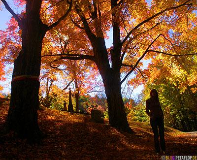 Gravestones-Indian-Summer-Trees-Canton-Cemetary-Canton-MA-Massachusetts-DSCN8843.jpg