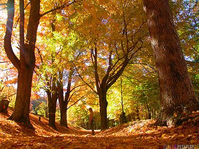 Indian-Summer-Trees-Canton-Cemetary-Canton-MA-Massachusetts-DSCN8834.jpg