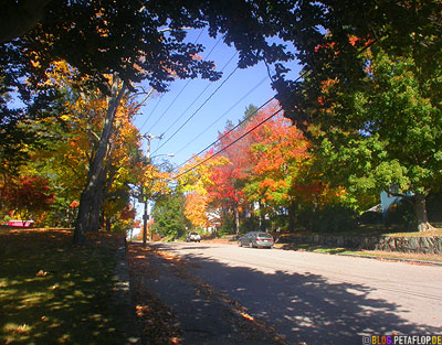 Indian-Summer-Trees-Canton-MA-Massachusetts-DSCN8865.jpg