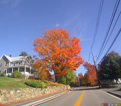 Indian-Summer-Trees-Canton-MA-Massachusetts-DSCN8868.jpg