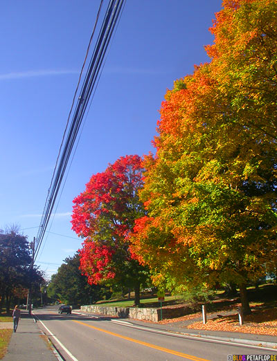 Indian-Summer-Trees-Canton-MA-Massachusetts-DSCN8876.jpg