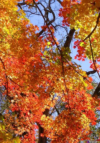 oranges-Herbstlaub-Indian-Summer-Trees-Canton-Cemetary-Canton-MA-Massachusetts-DSCN8839.jpg