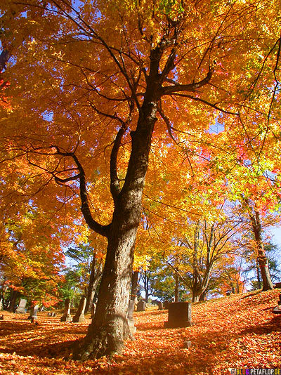 yellow-autumn-leaves-Gravestones-Indian-Summer-Trees-Canton-Cemetary-Canton-MA-Massachusetts-DSCN8841.jpg
