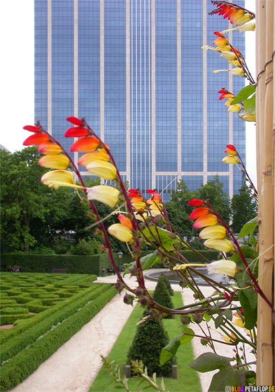botanic-garden-with-skyscraper-botanical-Brussels-Belgium-Botanischer-Garten-mit-Hochhaus-Bruessel-Belgien