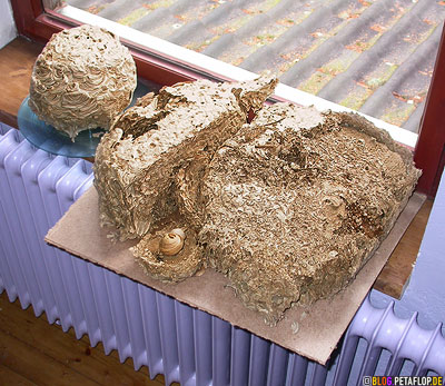 3-wasp-nests-on-the-windowsill-ilac-heater-radiator-Wespennester-auf-dem-Fensterbrett-fliederfarbene-heizung