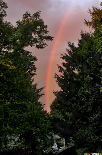 Rainbow-between-trees-Ash-Jew-Thuja-Larch-tree-Regenbogen-zwischen-Baeumen-Esche-Eibe-Thuja-Lebensbaum-Laerche