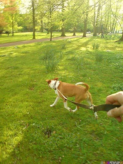 sunny-dog-walk-sonniger-Gassigang-Paska-Langenbergpark-Bocholt-Germany-DSC00025.jpg