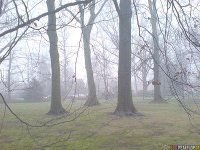 foggy park Bocholt Germany nebelig